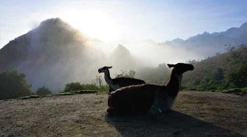 Lares Trek and Alpaca Sunrise